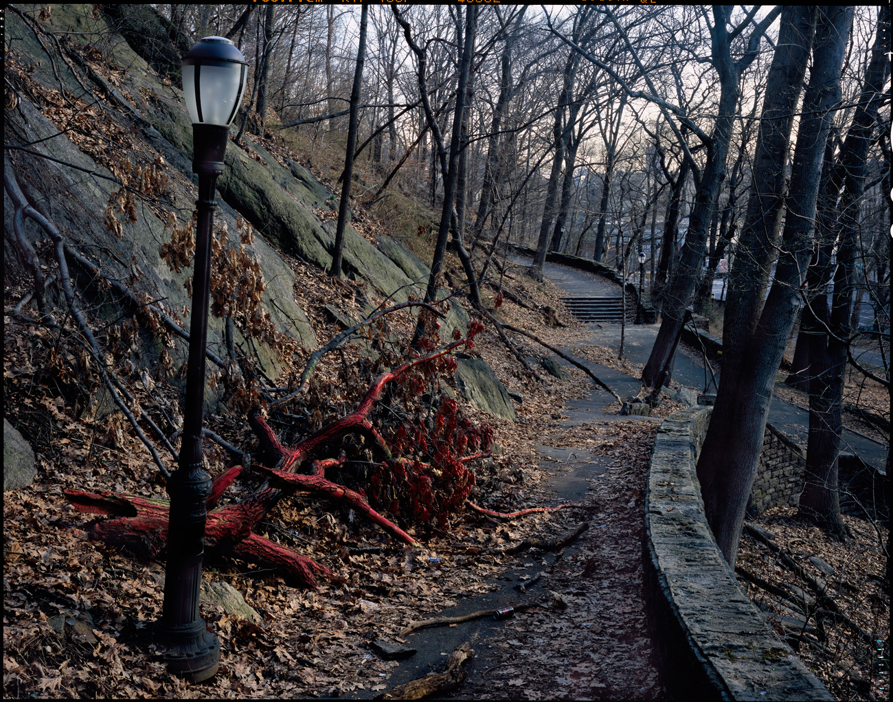 Fort Tryon Park, New York City, 2005